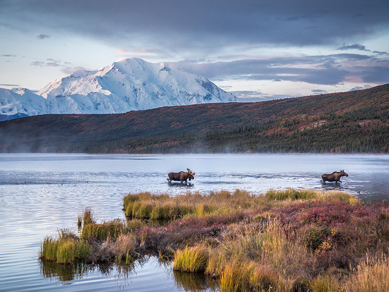Canadian Rockies Train Combo Circle Tour with Alaska Denali Cruise Tour | Moose