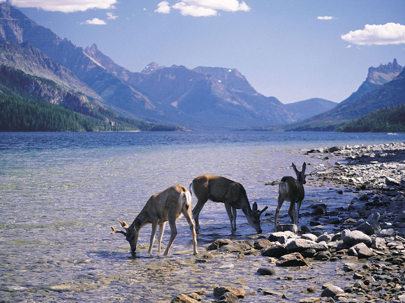 Canadian Trails Rail Across Canada | Bow River Canadian Rockies