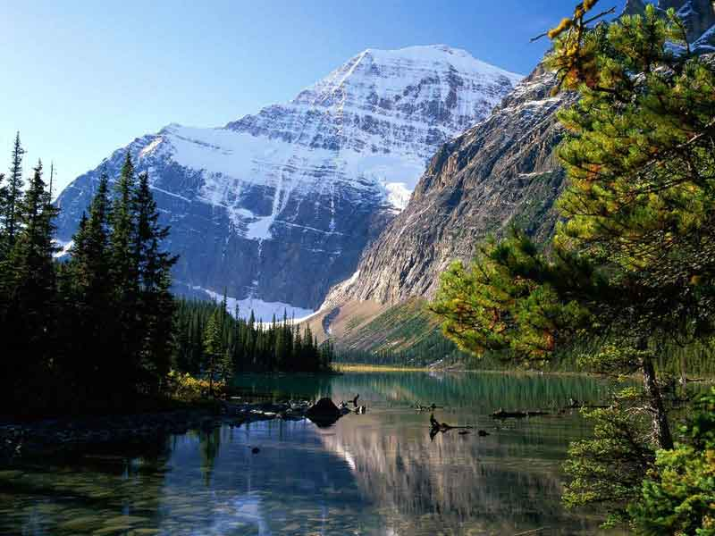 Grizzly Bears & the Canadian Rockies Train Vacation | Canadian Rockies